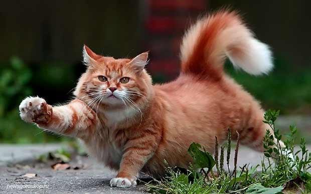Мужчина по гороскопу кот кролик