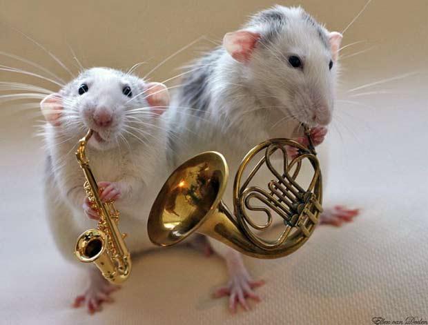 Крыса, Год Крысы