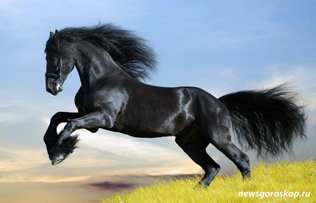 Мустанг, лошадь