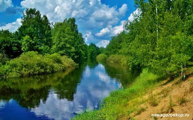 лето, река, лес, июнь