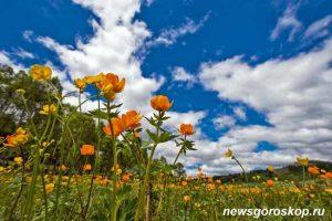 Небо, цветы, лето, июнь