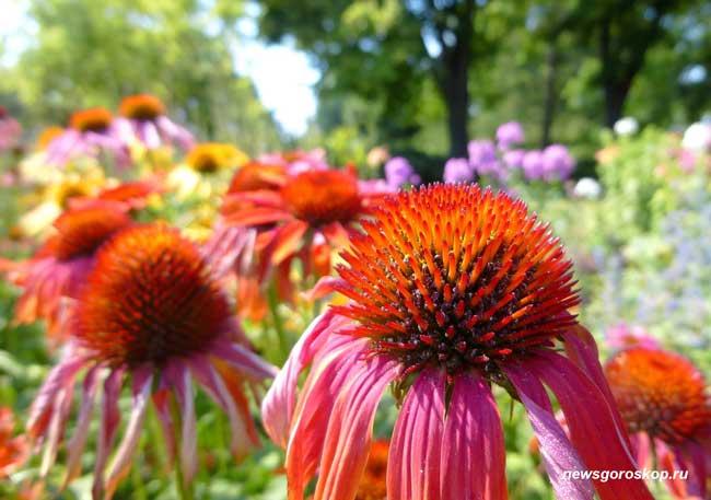 цветы, лето, июль