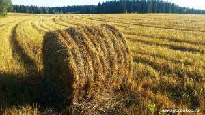 август, поле, сено, сенокос, уборка