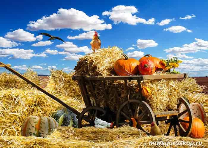 осень, сентябрь, сено, телега, уборка