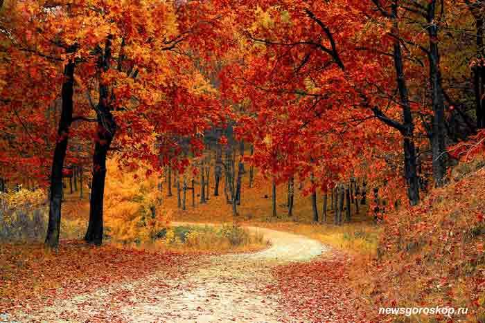 осень, октябрь, гороскоп на октябрь