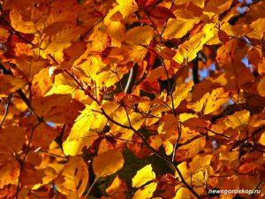 октябрь, осень, жёлтые листья, осенние листья, осенняя природа