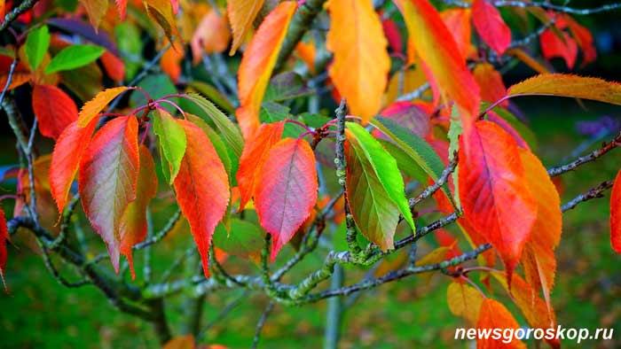 ноябрь, осень, жёлтые листья