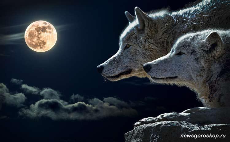 Луна, волк