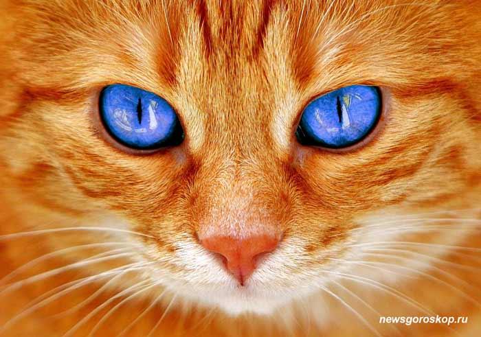Кот, рыжий кот