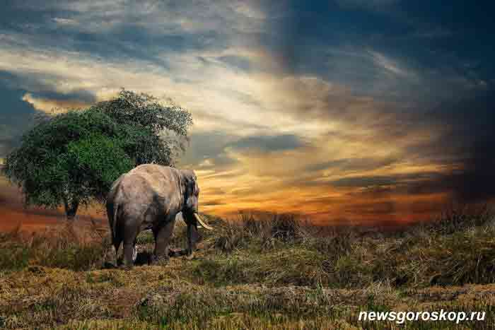 слон, туризм