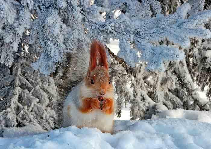 зима, белка, февраль