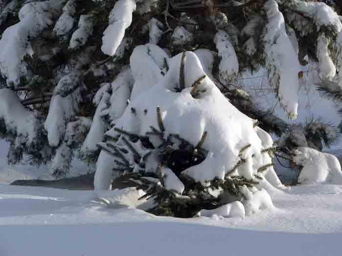 зима, лес, февраль
