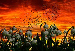 весна, подснежники, цветы
