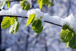весна, апрель, снег, зелень
