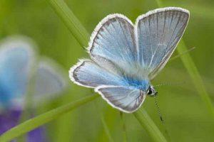 бабочка, лето, июль