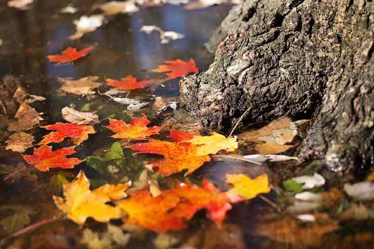 осень, октябрь