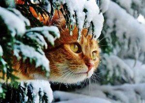 кот, январь, снег, зима