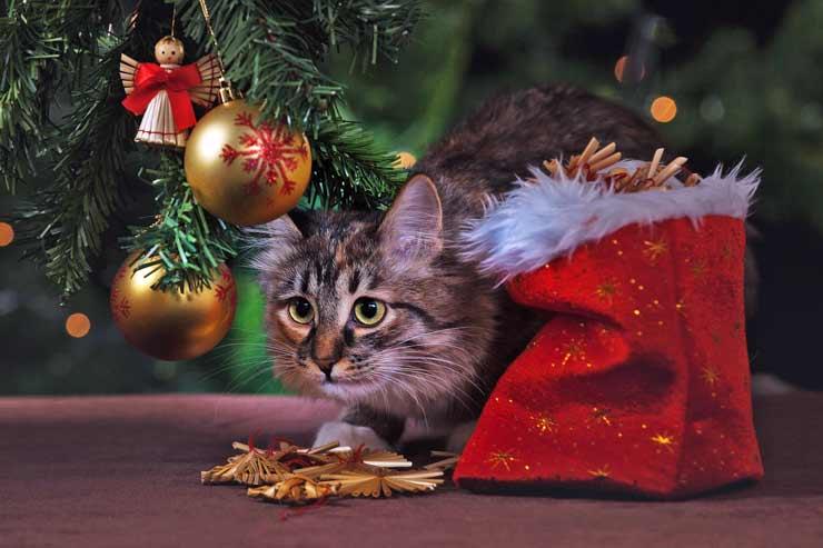 новый го, ёлка, кот, кошка, подарок