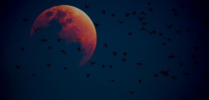 Луна, кровавая луна